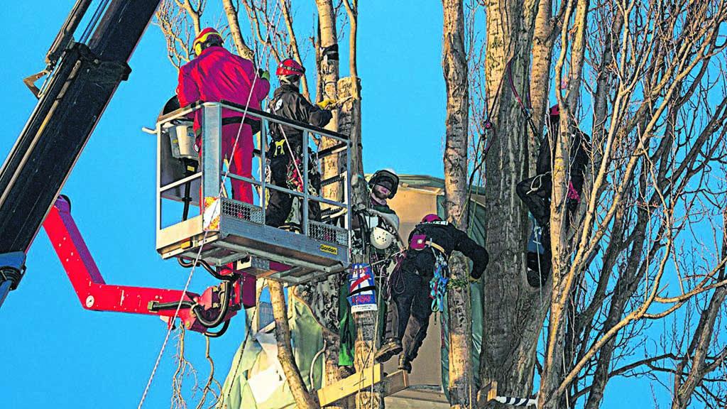 Berlin-Lichtenberg: Schonzeit für Bäume und Sträucher