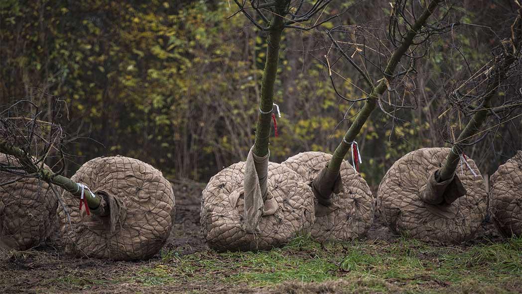 Marzahn-Hellersdorf bekommt 150 neue Bäume