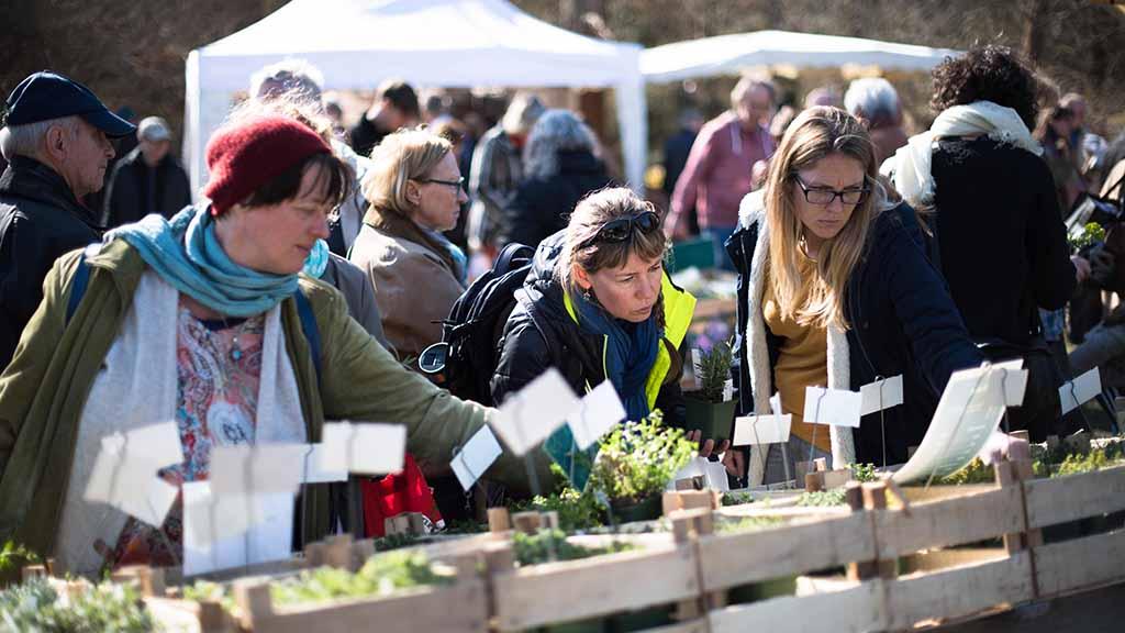 Steglitz-Zehlendorf: Berliner Staudenmarkt findet online statt