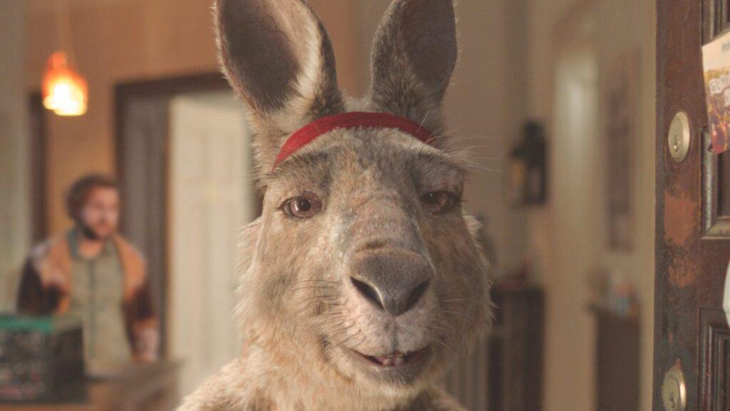 Känguru kommt ins Wohnzimmer