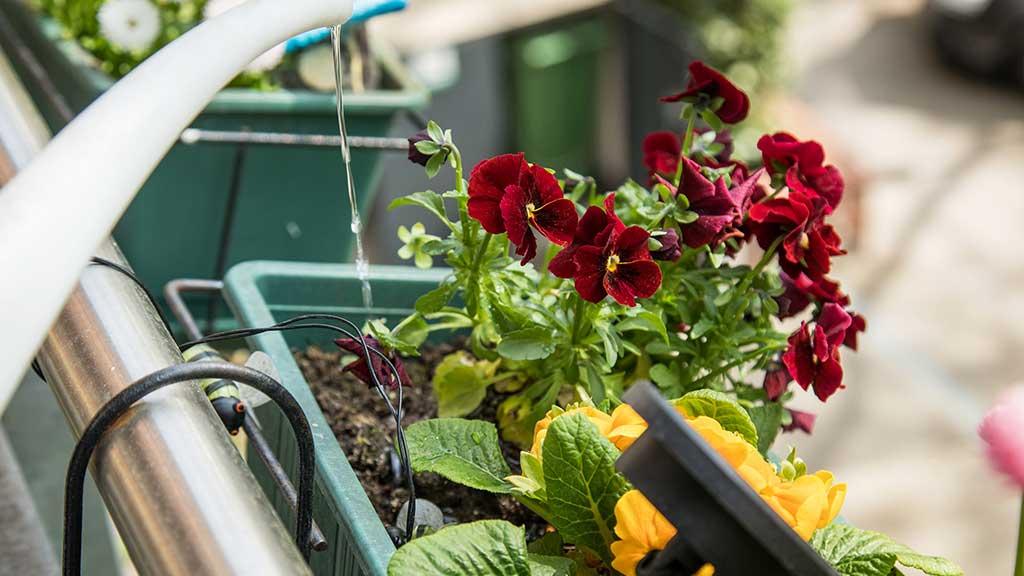 Praktische Tipps für einen grünen Balkon