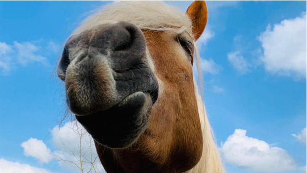 Berlin-Marzahn: Ein Pferd voller  Charakter