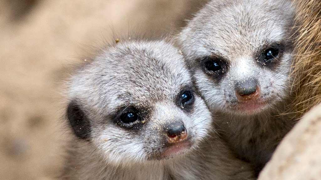 Tierpark und Zoo: Ein Stück Normalität in bewegten Zeiten