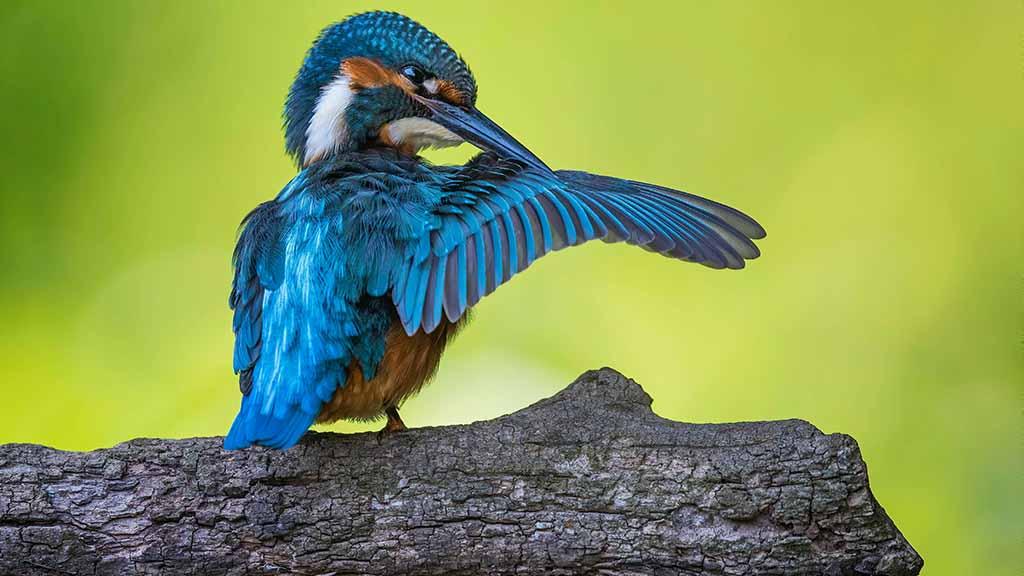 Berlin-Tegel: Sorge um Natur am Flughafensee