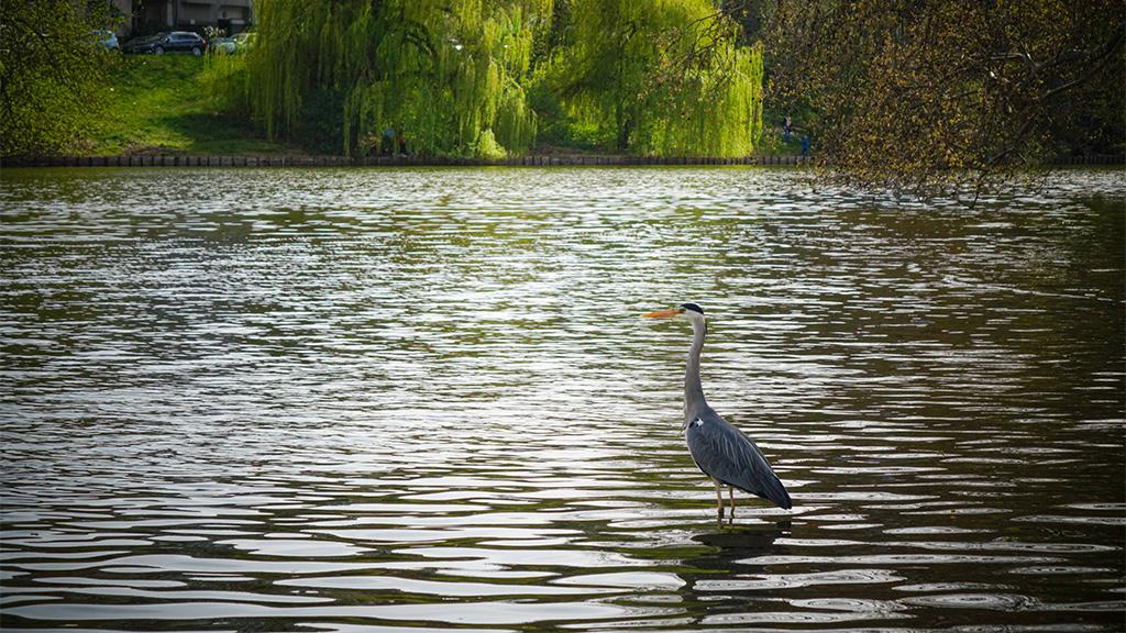 Berlin-Charlottenburg: Schönheitskur für den Lietzensee