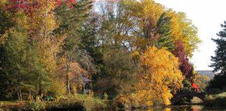 Amerikasee_Herbst_Botanischer-Garten_