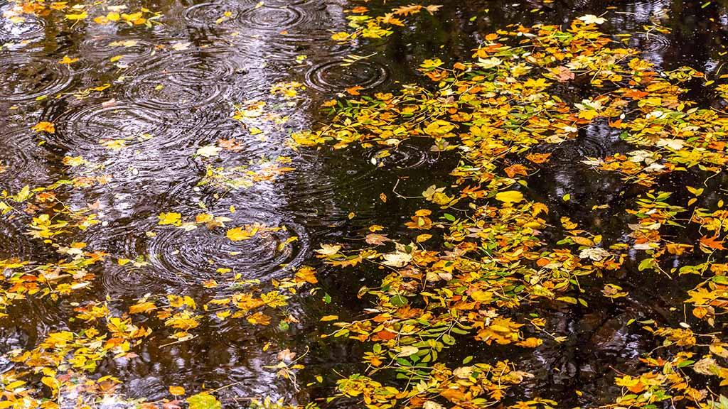 Berlin-Hermsdorf: Kleine Tongrube wird naturnah umgestaltet