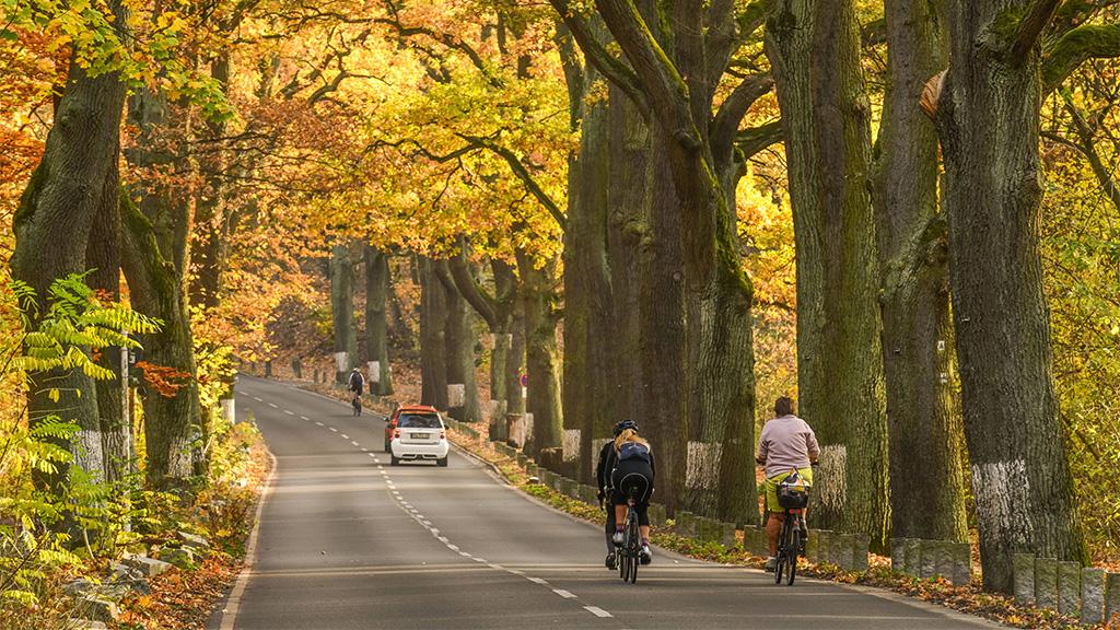 Berlin-Grunewald: Linke wollen Havelchaussee zur Fahrradstraße machen