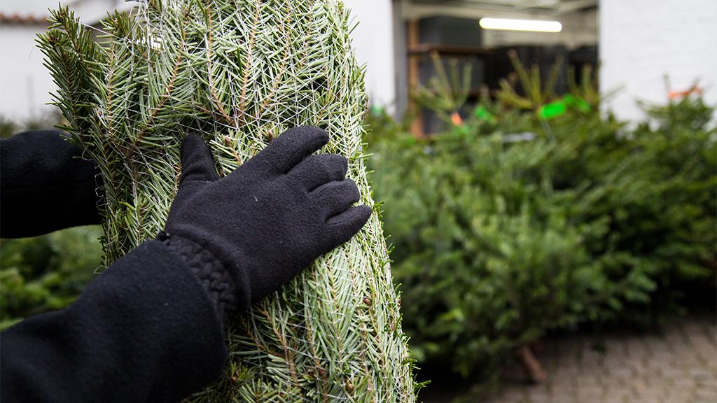 So viel kostet ein Christbaum im Corona-Jahr