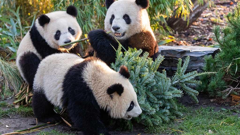 Tierische Weihnachten in Berliner Zoo und Tierpark