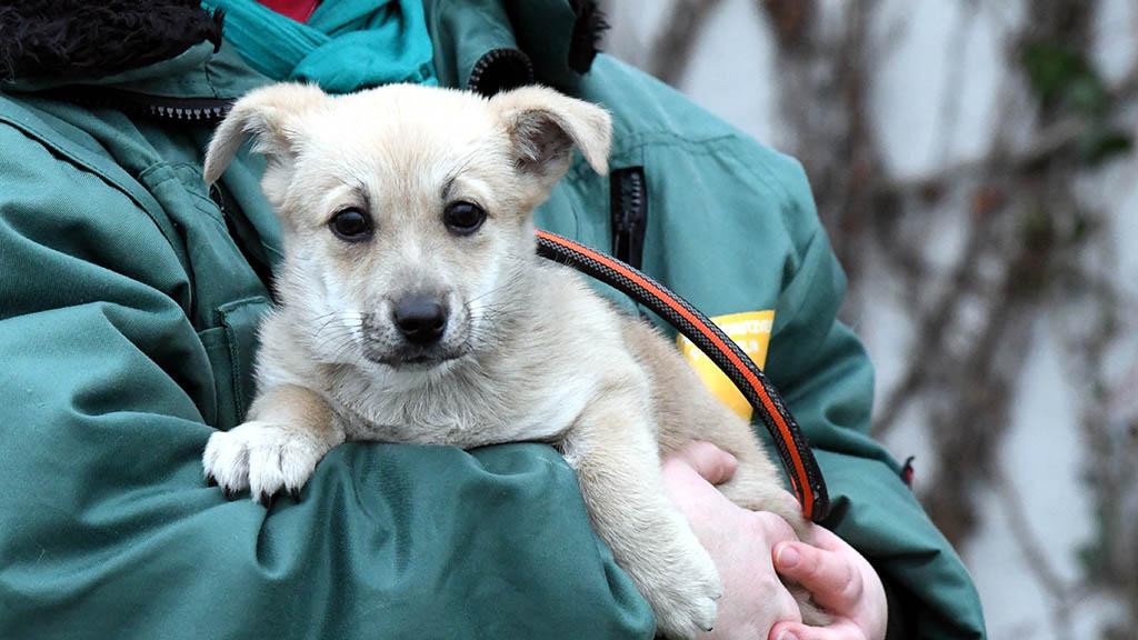 Tierheim Berlin: Zahl der Fundtiere zu Weihnachten gesunken