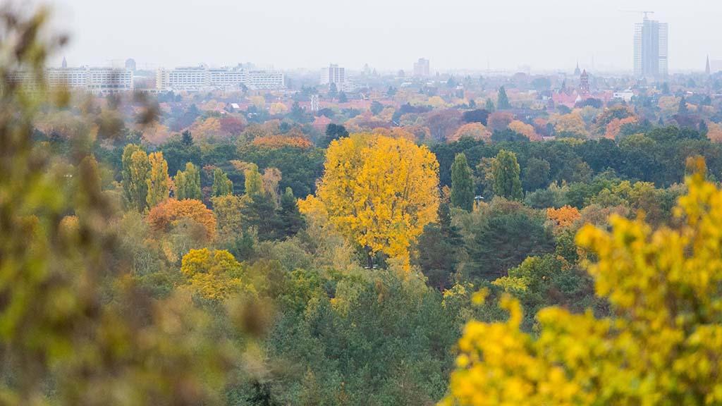 Berlins Wälder leiden unter Dürre und Hitze