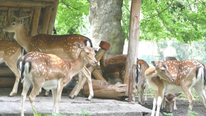Steglitz-Zehlendorf: Spendenaufruf für die Tiere im Gemeindepark Lankwitz