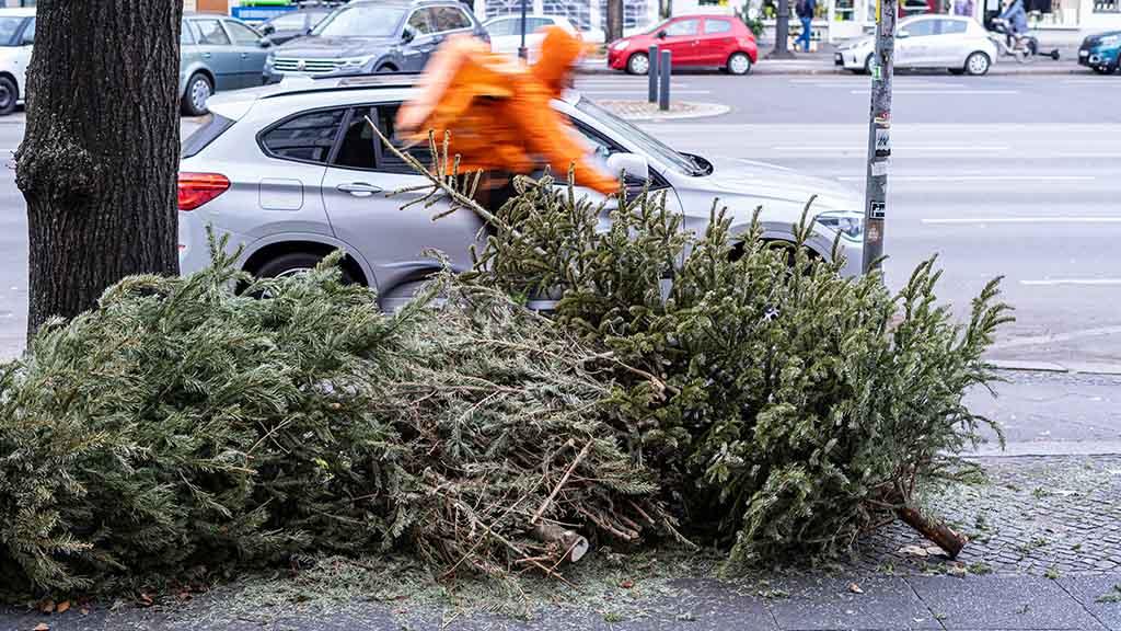 Alte Weihnachtsbäume werden Energie