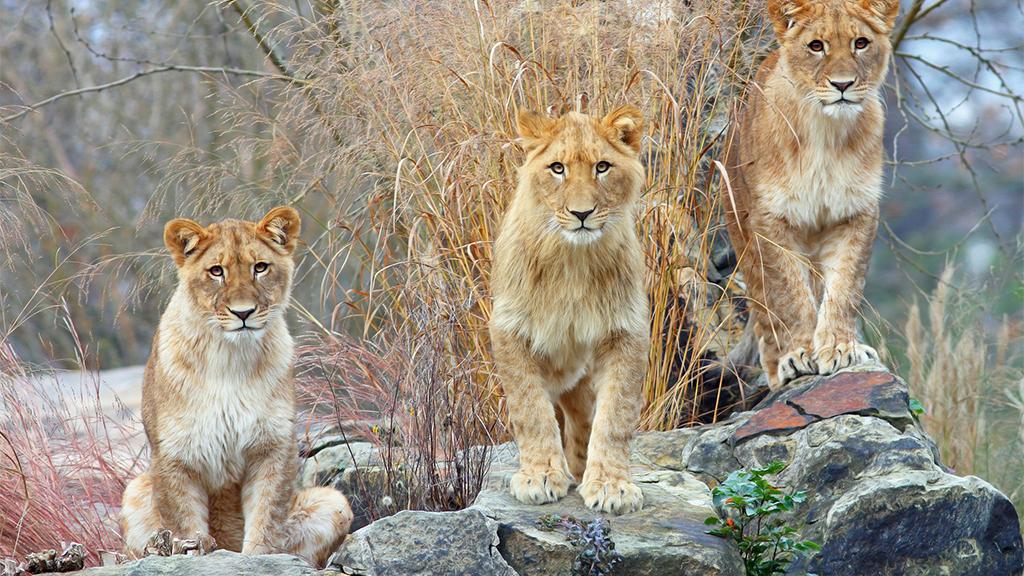 Nach einem Jahr Pandemie: Verkehrte Welt in Zoo und Tierpark