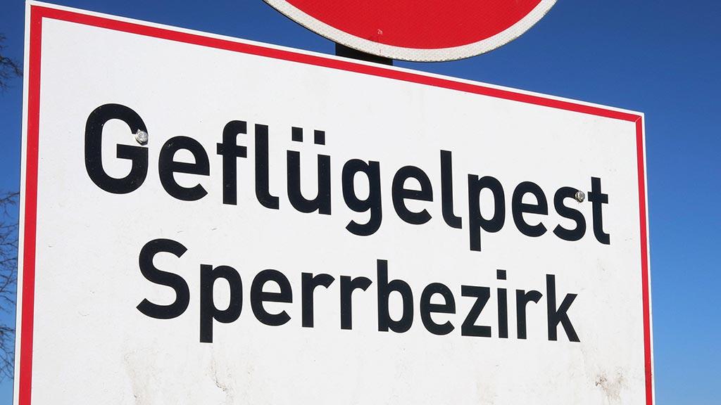 Geflügelpest H5N8 in Berliner Stallung festgestellt
