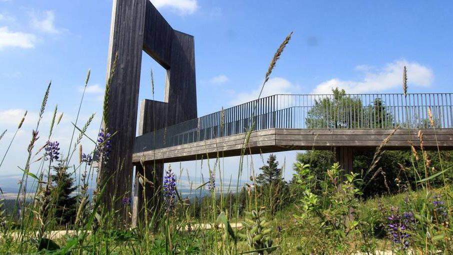 Im Nationalpark Hunsrück-Hochwald Natur hautnah erleben