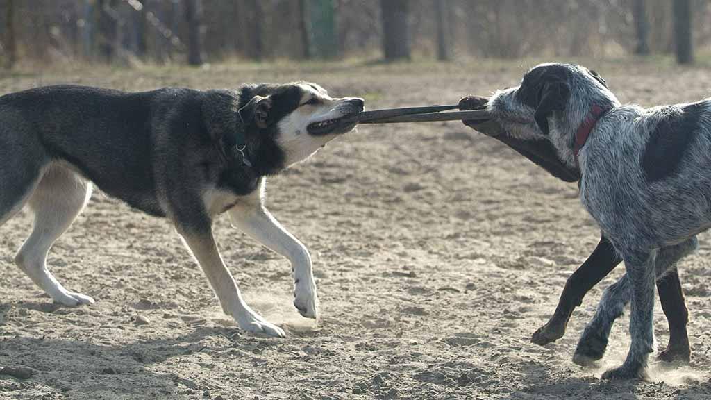 Tierschützer fordern mehr Freiraum für Hunde in Berlin