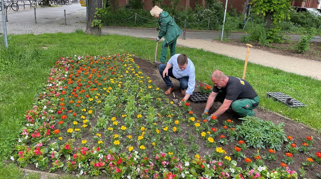 30.800 Sommerblüher für Lichtenberger Parkanlagen