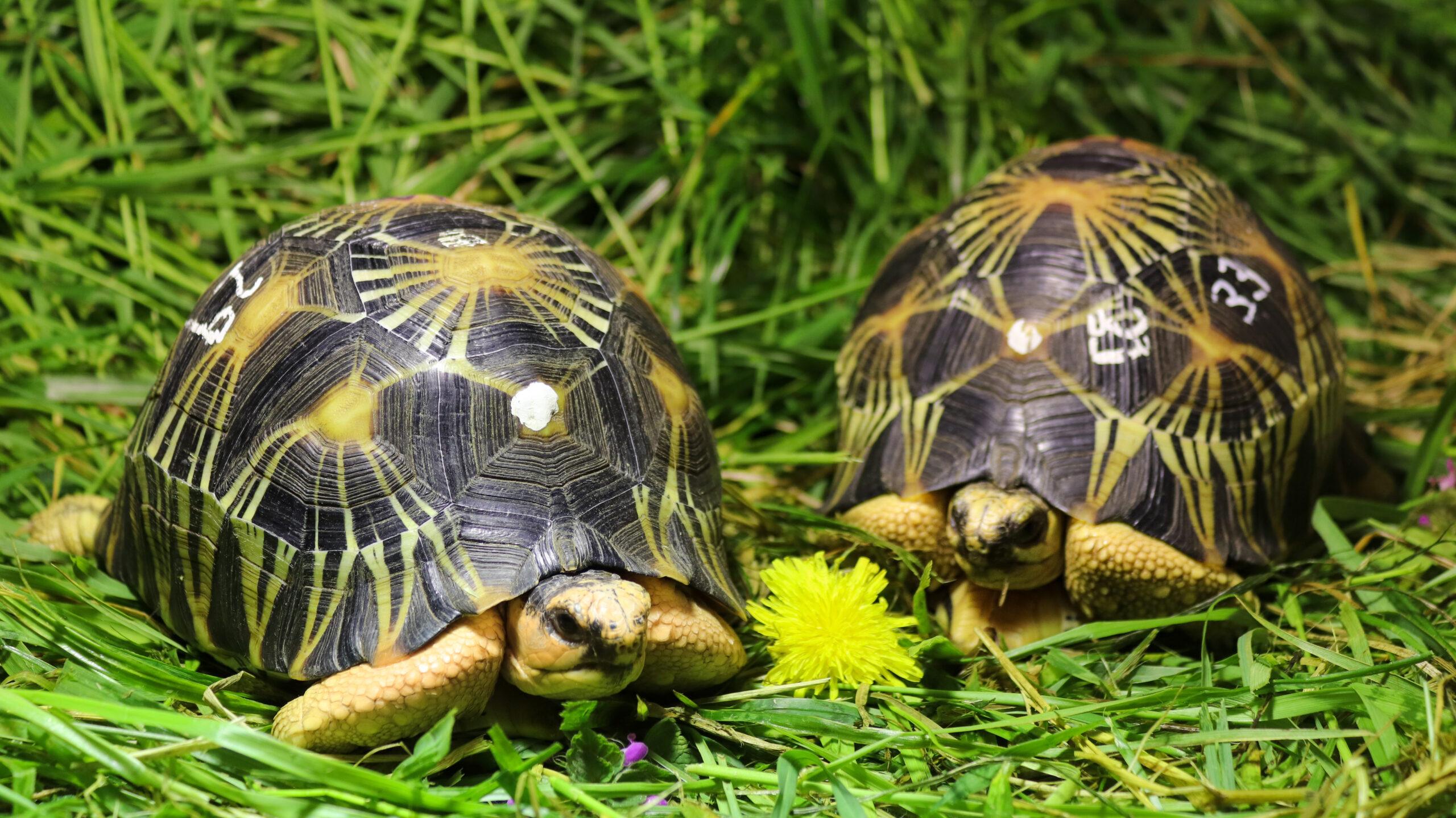Neue Heimat für Schmuggler-Schildkröten