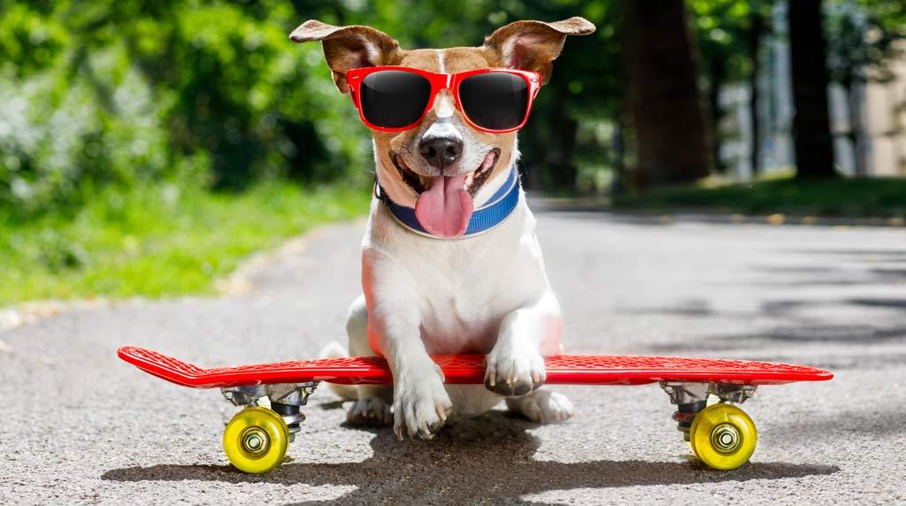 Emma, Luna und Balu sind die beliebtesten Berliner Hundenamen