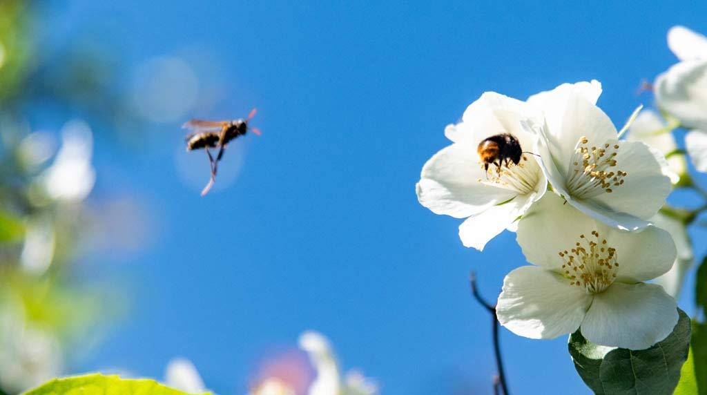 Neue Bienenvölker für Marzahner Gewerbegebiet