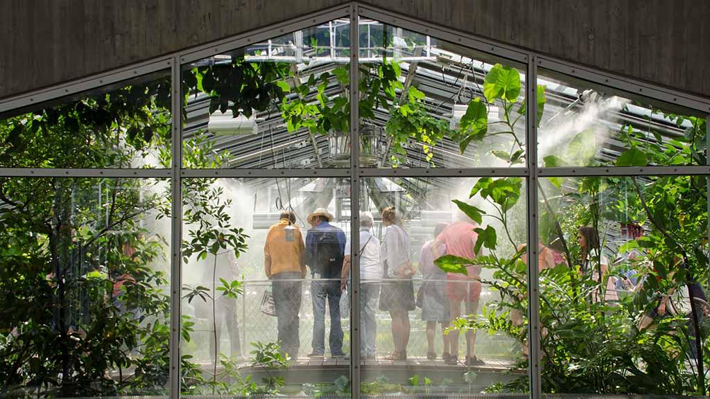 Corona-Lockerungen: Blütenpracht im Botanischen Garten wieder offen für Besucher