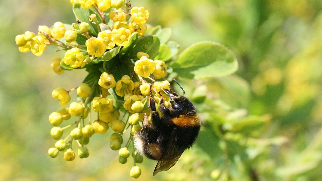 Berlin-Spandau: Gartenparadies für Menschen und Bienen