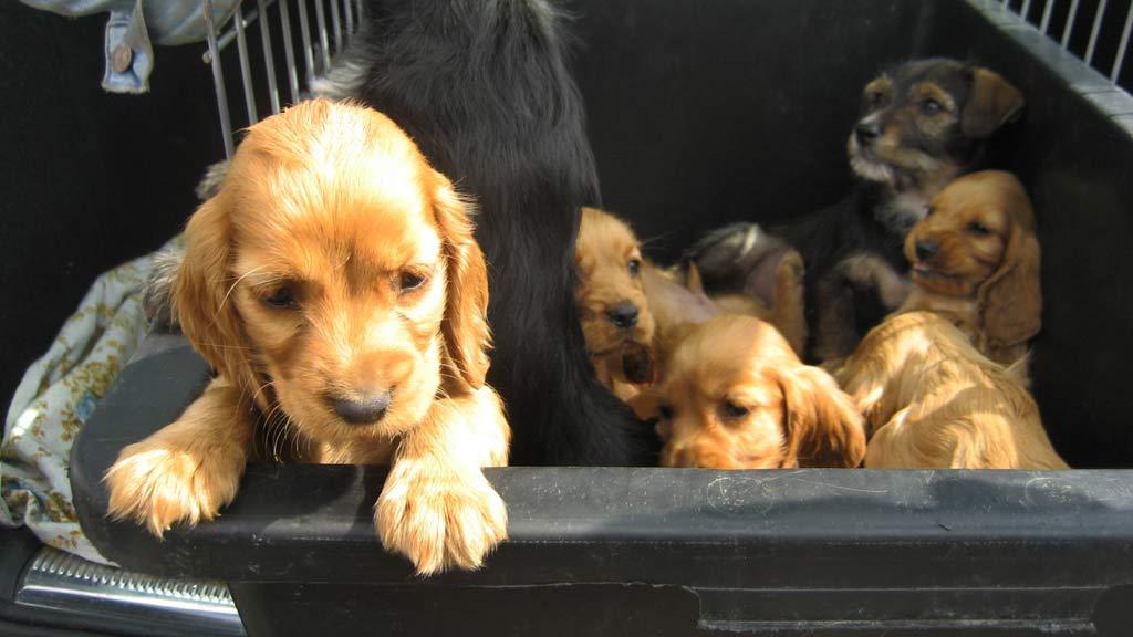 Tierschutzverbände starten Kampagne gegen illegalen Welpenhandel