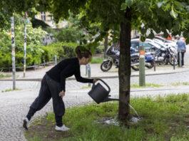 2.000 Stadtbäume müssen im kommenden Jahr in Friedrichshain-Kreuzberg gefällt werden.